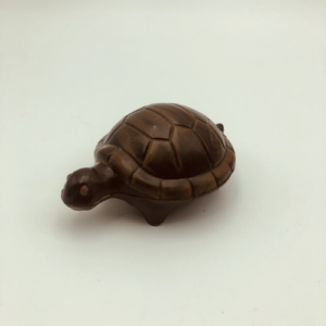 tortue paques yver
